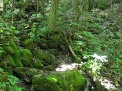 Creek alongside Chestnut Mountain Cabin