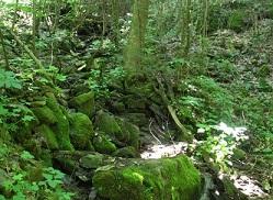 Chestnut Mountain cabin creek