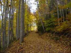Chestnut Mountain Cabin Hiking Path